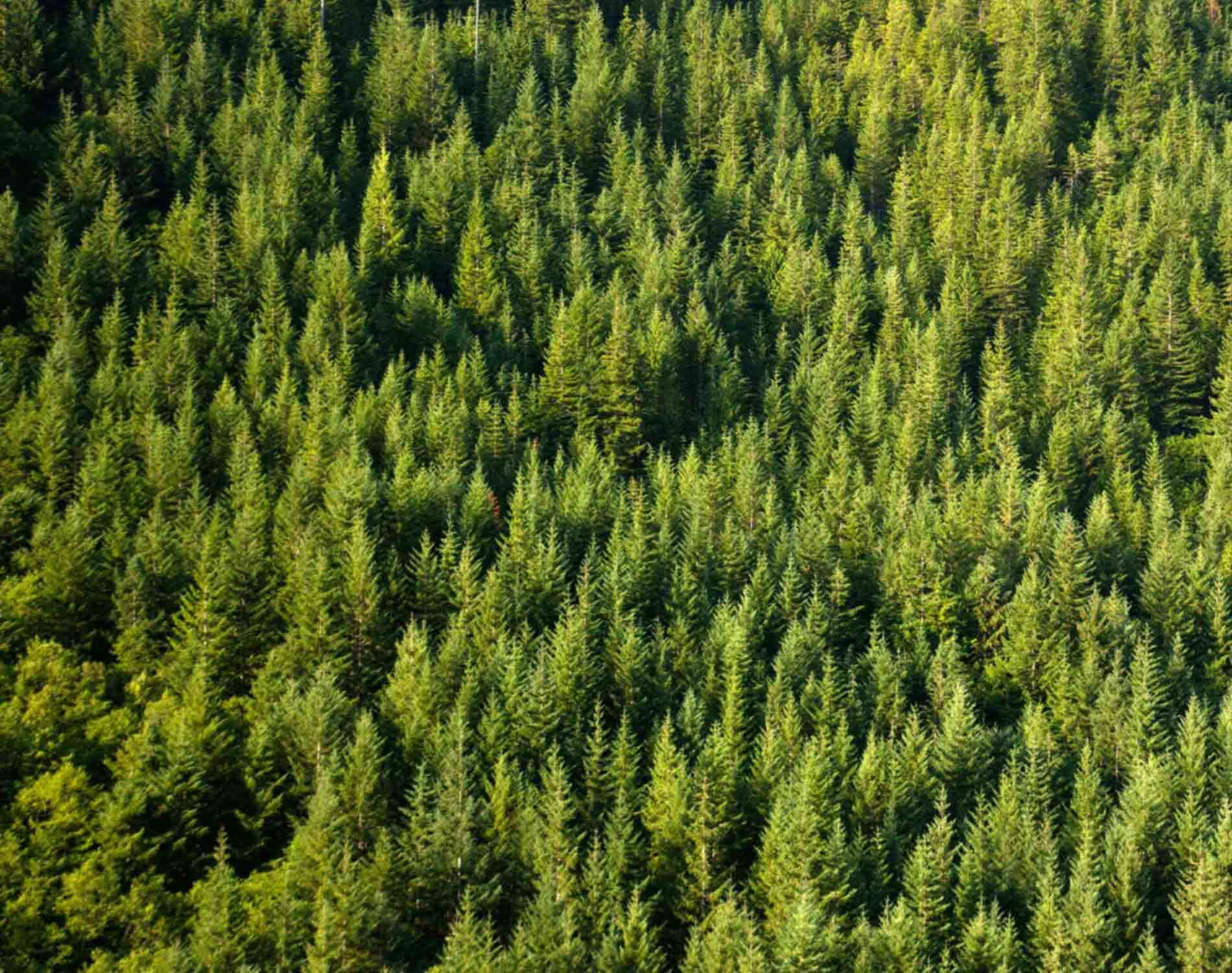 Forest Sector Remains a Vital Economic Engine for BC